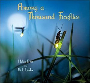 Thousand_Fireflies