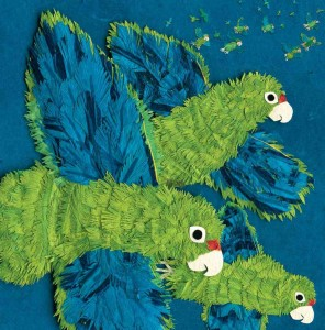 parrots-over-puerto-rico